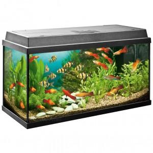Aquarium Komplettset - Juwel 21800 Rekord 800